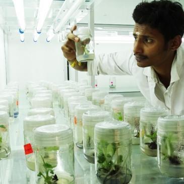 Student Volunteer Internships at MSSRF-Centre, Wayanad